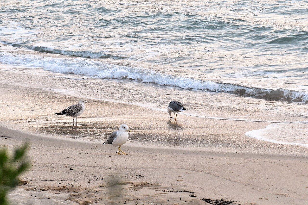 Spiaggia Isola d'Elba